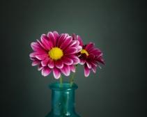 Flowers-1-26-16-2